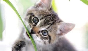 Katze knabbert an Grashalm