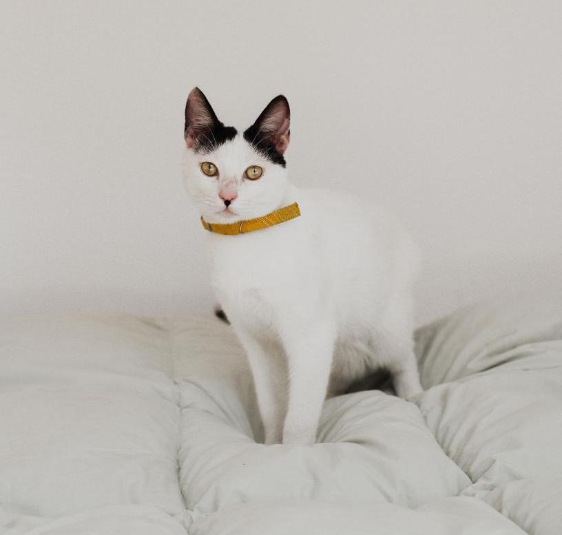 Katzenurin Entfernen So Geht Es Richtig Spezialreiniger Blog