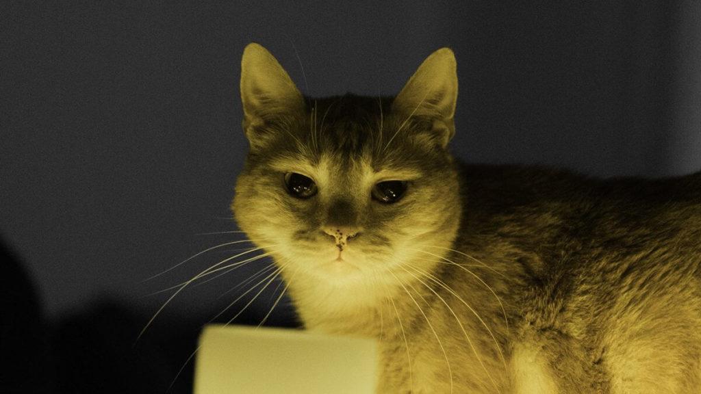 Neugierige Katze schaut in die Kamera