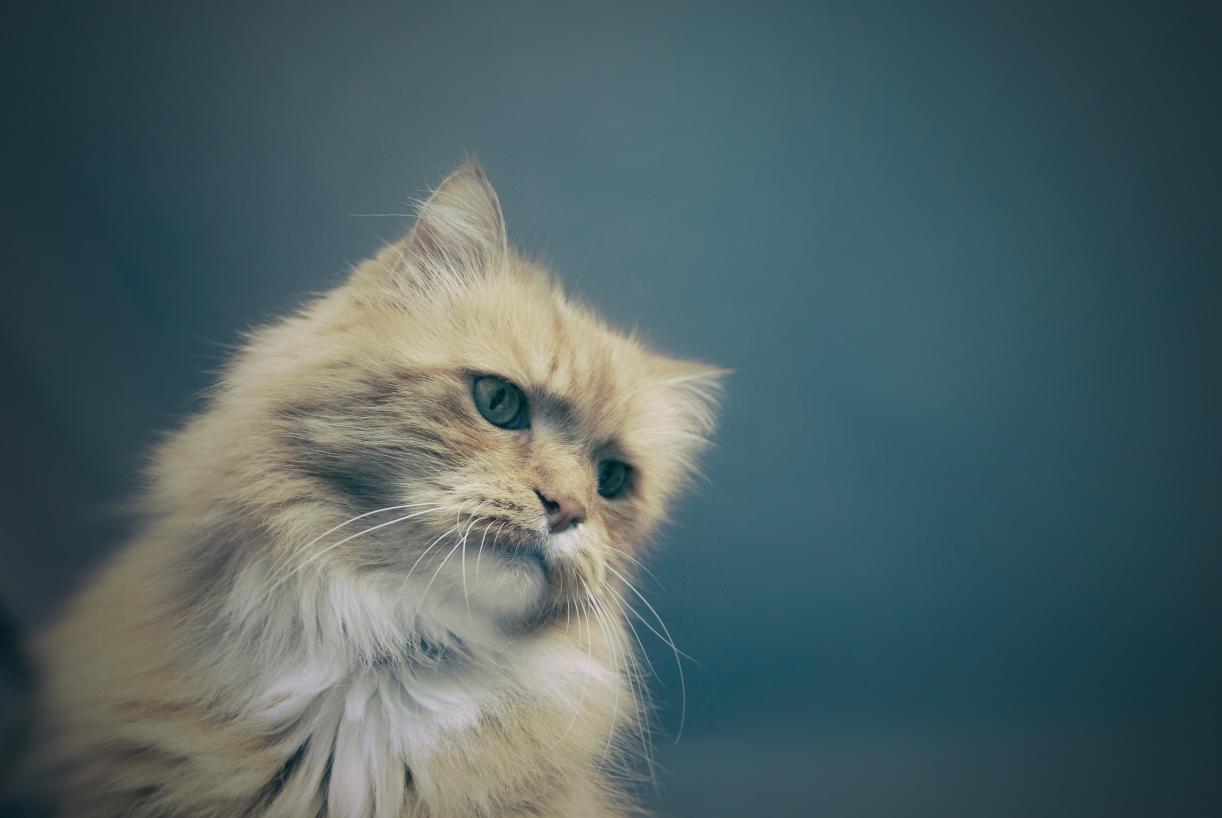Katze guckt traurig